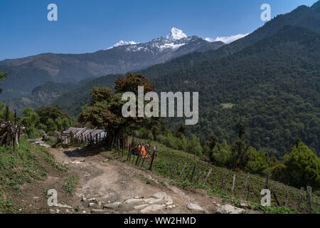 Backcountry in Annapurna Conservation Area in Nepal, with Mount Annapurna South summit viewed from trek from Ghorepani to Tatopani - Stock Photo