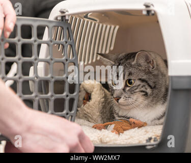 Cat in a transport box for safe transport. - Stock Photo