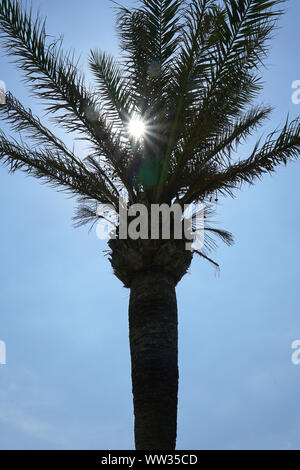 A palm tree silhouetted against a blue sky with the sun's rays shining through the leaves - Stock Photo