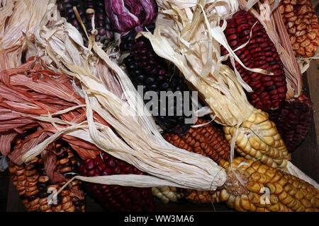 Maiskolben in verschiedenen Farben als Dekoration - Stock Photo
