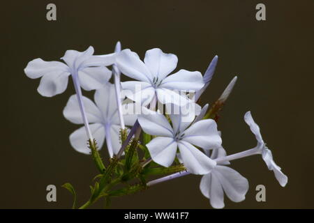 WHITE FLOWERS AND BUDS - Stock Photo