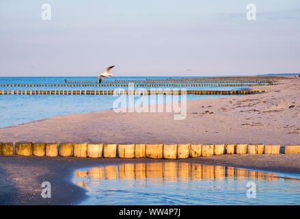 Groynes on the Baltic Sea beach in Prerow, Darß, Fischland-Darß-Zingst, Mecklenburg-West Pomerania, Germany - Stock Photo