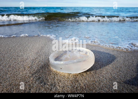dead jellyfish on Baltic Sea beach in Prerow, Darß, Fischland-Darß-Zingst, Mecklenburg-West Pomerania, Germany - Stock Photo