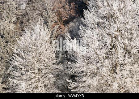 Hoarfrost in trees, nature reserve Isarauen, Geretsried, Upper Bavaria, Bavaria, Germany - Stock Photo
