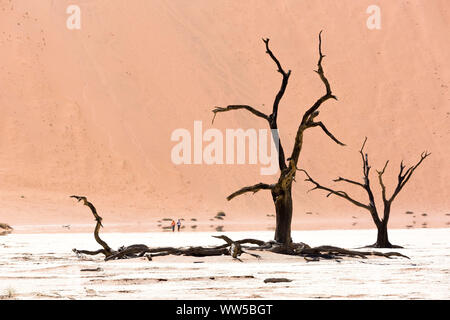 Tourists walking in the middle of a large salt pan with old dead trees, Deadvlei, Namib Naukluft Park, Namibia - Stock Photo