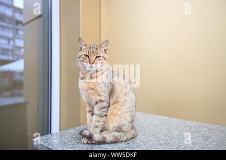 Homeless tabby cat sitting on city street near house - Stock Photo