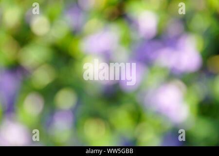 Evergreen, Vinca minor, Bokeh, blurred - Stock Photo