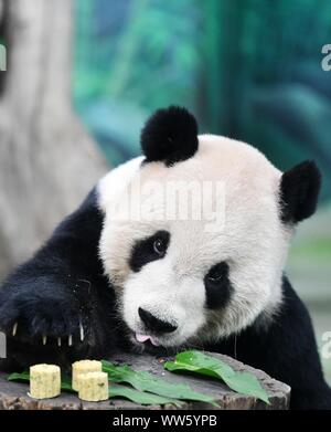 Taipei's Taiwan. 13th Sep, 2019. Giant panda Tuantuan tastes specially-made mooncakes at Taipei Zoo in Taipei, southeast China's Taiwan, Sept. 13, 2019. Mooncakes and skewered fruits and vegetables were specially made by the staff of Taipei Zoo for giant pandas to celebrate the the Mid-Autumn Festival. Credit: Chen Bin/Xinhua/Alamy Live News - Stock Photo