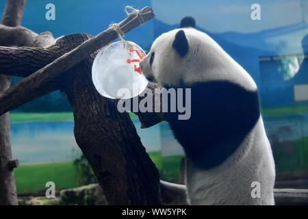 Taipei's Taiwan. 13th Sep, 2019. Giant panda Yuanzai tastes a piece of ice in the shape of mooncake at Taipei Zoo in Taipei, southeast China's Taiwan, Sept. 13, 2019. Mooncakes and skewered fruits and vegetables were specially made by the staff of Taipei Zoo for giant pandas to celebrate the the Mid-Autumn Festival. Credit: Chen Bin/Xinhua/Alamy Live News - Stock Photo
