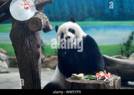 Taipei's Taiwan. 13th Sep, 2019. Giant panda Yuanzai eats skewered fruits and vegetables at Taipei Zoo in Taipei, southeast China's Taiwan, Sept. 13, 2019. Mooncakes and skewered fruits and vegetables were specially made by the staff of Taipei Zoo for giant pandas to celebrate the the Mid-Autumn Festival. Credit: Chen Bin/Xinhua/Alamy Live News - Stock Photo