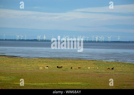 View from the dunes of the North Sea island Juist above the Wadden Sea on wind power stations on the East Frisian mainland. - Stock Photo