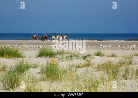Rider and flock of gulls on the beach of the North Sea island Juist. - Stock Photo