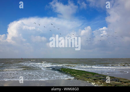 Gulls above a stone breakwater on the west beach of the island Norderney - Stock Photo