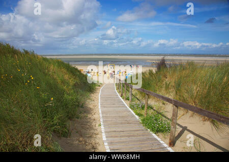 Blossoming sea rocket at the dune crossing to the main beach on the island Langeoog. - Stock Photo