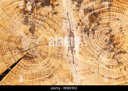 Wooden background, trunk in the cross section, tree-rings - Stock Photo