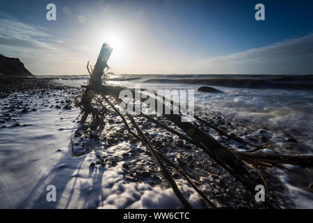 Baltic sea at evening light and long exposure, setting sun lights branches and stones in the sea water - Stock Photo