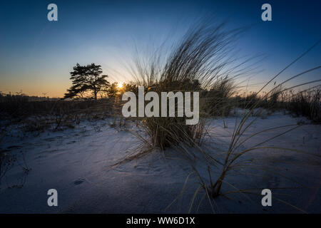 Beach grass in the sunlight, winter on the Baltic Sea and grasses on the beach - Stock Photo