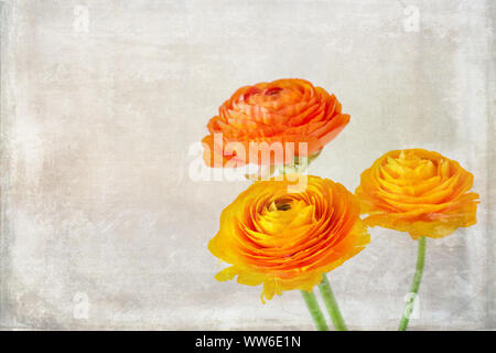 Close-up of three orange ranunculus with vintage texture - Stock Photo