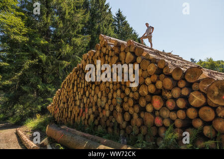 A man has climbed a huge pile of wood. On one of the lower tree trunks is written in German: Enter prohibited - Stock Photo