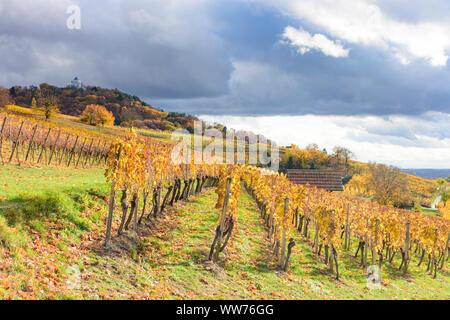 Heppenheim (Bergstraße), vineyard, vineyards of wine growing area Bergstrasse, castle Starkenburg, golden autumn, yellow vine leafs, hill, sunny in Bergstraße, Hessen, Hesse, Germany