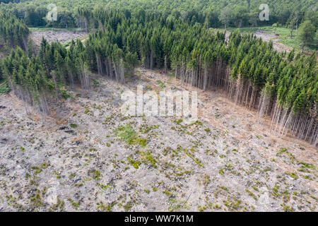 aerial view of a clear cut in german forest - Stock Photo