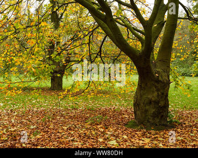 Autumnal trees in the park, Germany, - Stock Photo