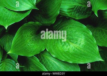 Fresh green foliage with raindrops. Close up. - Stock Photo