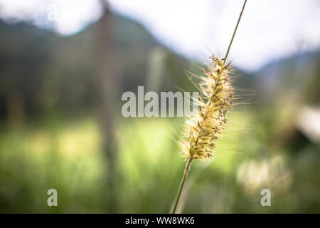Macro view of single stalk of wild plant weed on shallow depth of field - Stock Photo