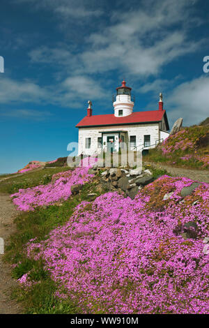 Spring bloom of ice plant around Battery Point Lighthouse (1856) on California's north coast at Crescent City. - Stock Photo