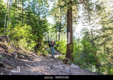 Maroon Bells crater lake trail in Aspen, Colorado with forest footpath and man taking picture of porcupine wildlife wild animal - Stock Photo