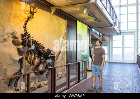 Jensen, USA - July 23, 2019: Skeleton in Quarry visitor center exhibit hall and tourist man looking in Dinosaur National Monument Park of wall fossils - Stock Photo