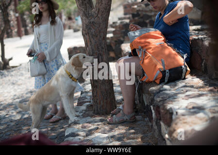 Santorini, Greece - June 24, 2018: A yellow Labrador dog begs for food from a tourist with an orange backpack in the town of Akrotiri. - Stock Photo