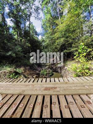 The Woodlands, TX USA - 08/23/2019  -  Wooden Bridge Over Creek and Trees - Stock Photo