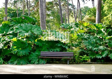 Empty park bench. Lush Gunnera manicata, known as Brazilian giant-rhubarb, or dinosaur food. A species of flowering plant. Parc Floral, Paris, France. - Stock Photo
