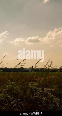 Green weeds sway in the wind. #2 - Stock Photo