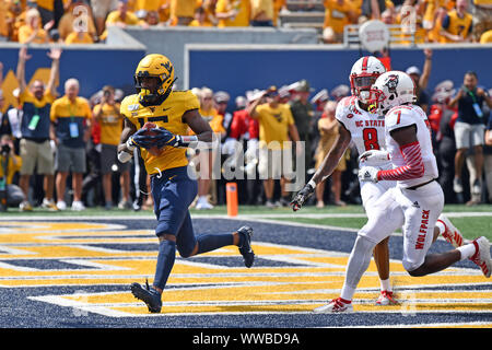 Morgantown, West Virginia, USA. 14th Sep, 2019. West Virginia Mountaineers wide receiver GEORGE CAMPBELL (15) catches a touchdown during the football game played at Mountaineer Field in Morgantown, WV. WVU upset NC State 44-27. Credit: Ken Inness/ZUMA Wire/Alamy Live News - Stock Photo