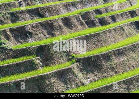 Background pattern of Sapa rice terraces in Lao Cai province, Vietnam. - Stock Photo