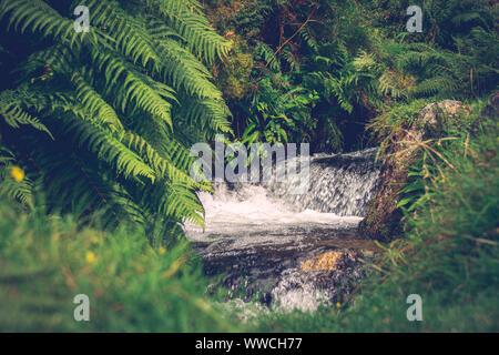 River stream over rocks amongst fern vegetation. Dartmoor, Plymouth, UK - Stock Photo