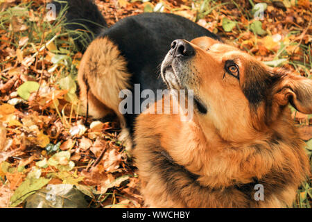 Dog looks up in the forest - Stock Photo