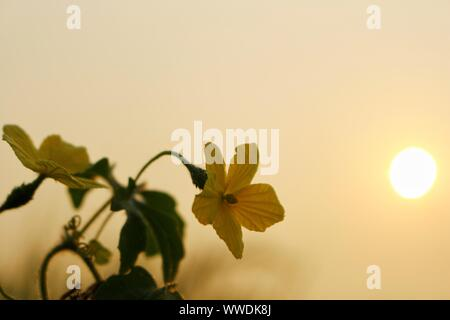Yellow flowers in wild nature on beautiful sky background - Stock Photo