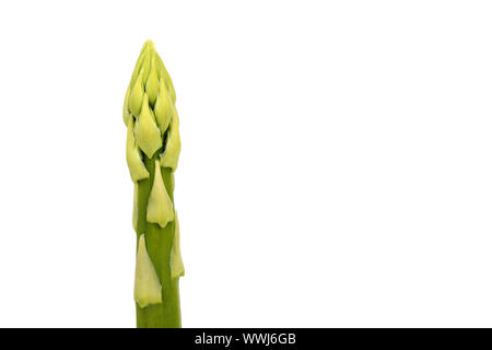 green asparagus, Aspagurus, asparagus tip - Stock Photo