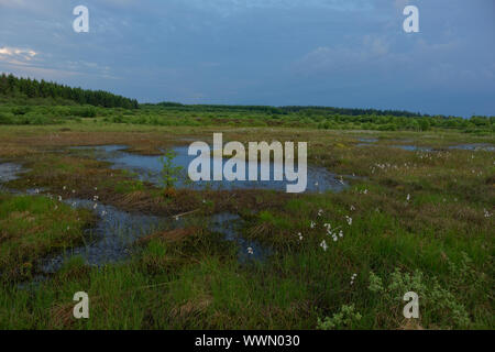 In the Hohes Venn,Hautes Fagnes reserve, Belgium - Stock Photo