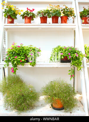 plants and flowers on white shelf - Stock Photo