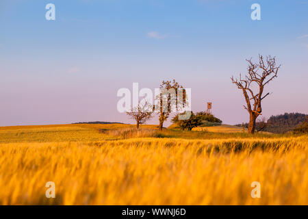 Landscape in evening mood - Stock Photo