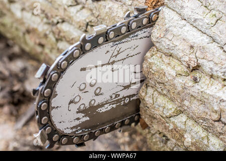 Detail of a chainsaw when sawing a tree trunk - Stock Photo