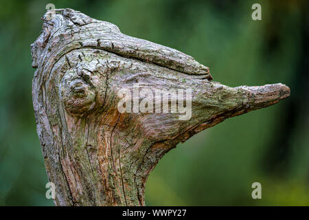 Nicely shaped piece of an old weathered tree root that looks like the portrait of an ostrich, real natural art - Stock Photo