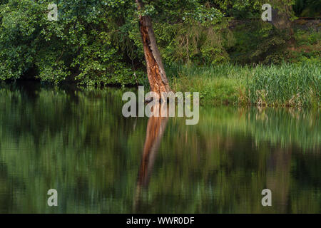 Mountain lake in the Harz Mountains - Stock Photo