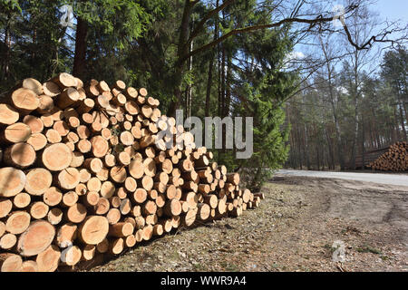 Wooden logs. Timber logging in autumn forest. Freshly cut pine tree logs - Stock Photo