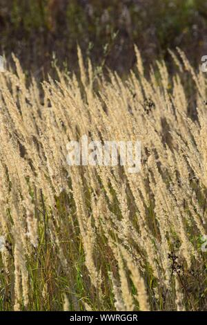 Fog grass in the Morninglight - Stock Photo