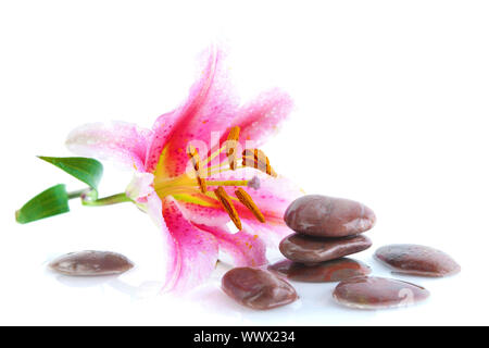 Pink lily and stones, with water reflection - Stock Photo